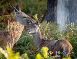 Deer Embrace by Carpenter Photography