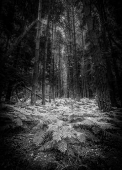 Hollybank Woods by Carpenter Photography