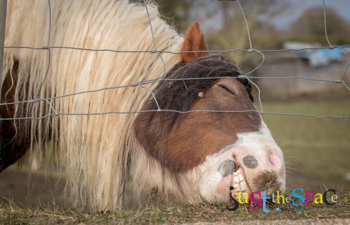 Laughing Horse by Carpenter Photography