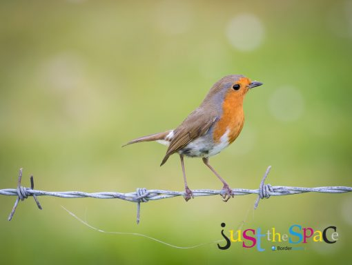 Bird on a Wire by Carpenter Photography